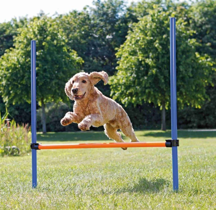 Trixie Dog Activity Agility Hürde 123cm x 115cm /ø 3 cm